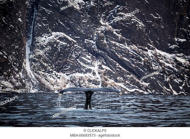 Mefjordvaer, Senja Island, Norway