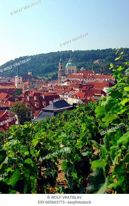 Svatovaclavska Vineyard, Prague castle