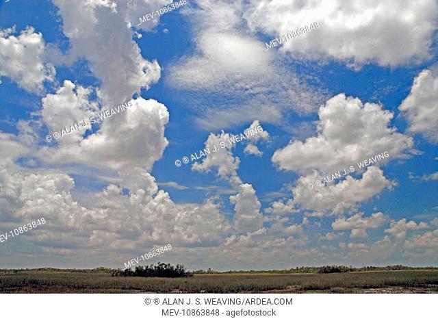 Cumulus clouds developing over Shark Valley. Everglades National Park, Florida, USA