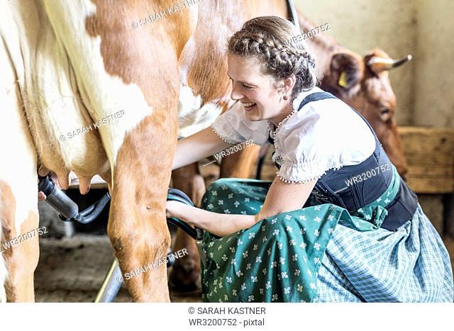 Farmer's wife with dirndl milks a cow