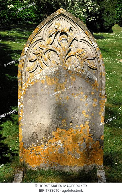 Old grave stone with a relief of the tree of life, cemetery of the Church of St. John the Baptist, Bere Regis, Dorset, southern England, England, United Kingdom