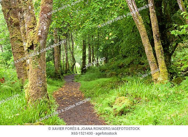 Aros Park near Tobermory, Isle of Mull, Argyll and Bute, Scotland