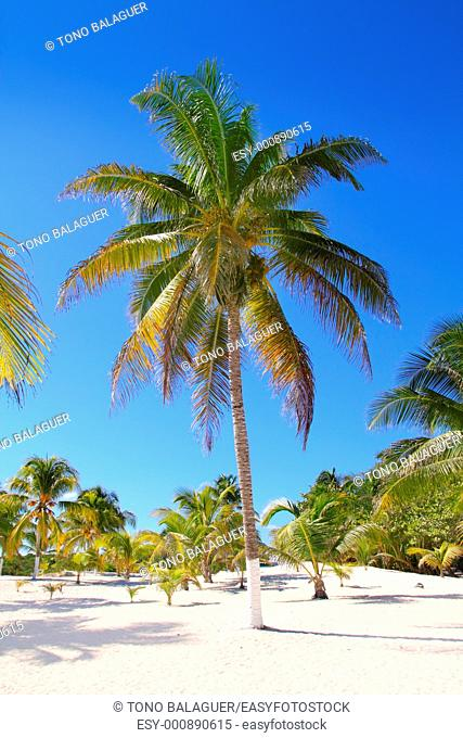 coconut palm trees with white sand in tropical paradise