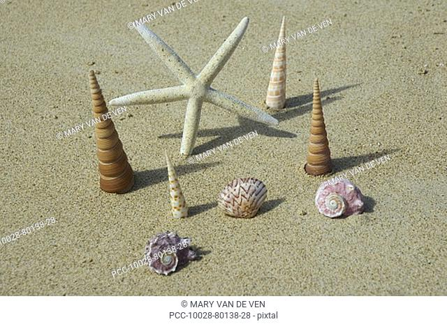 White seastar and shell standing upright in sand