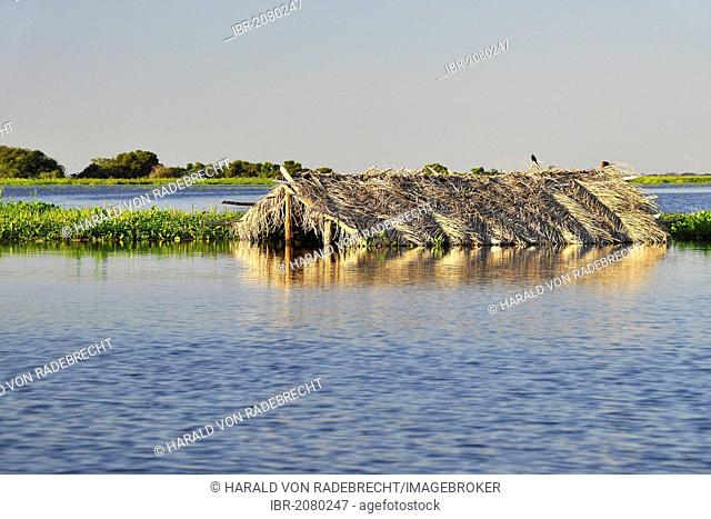 House under water in the Pantanal, worldwide largest swamp, maximum water level, Corumba, Brazil - Bolivia border city, South America