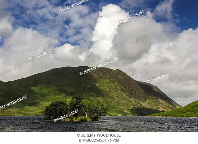 Trees on island in river