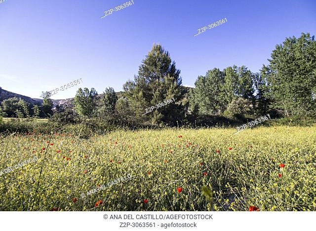 Spring fields in La Costera county. Valencian community. Spain