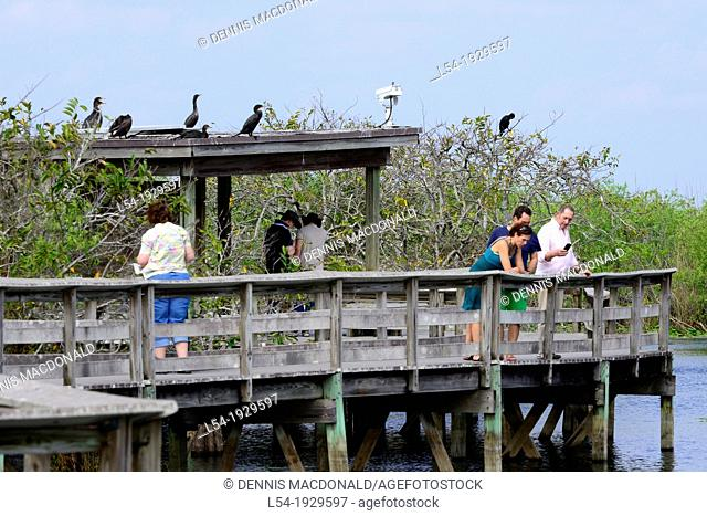 Visitors Observe Wildlife Everglades National Park Homestead Florida FL US