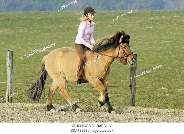 girl riding on Icelandic horse
