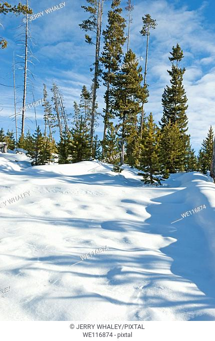 Winter Snow in Yellowstone National Park, WY