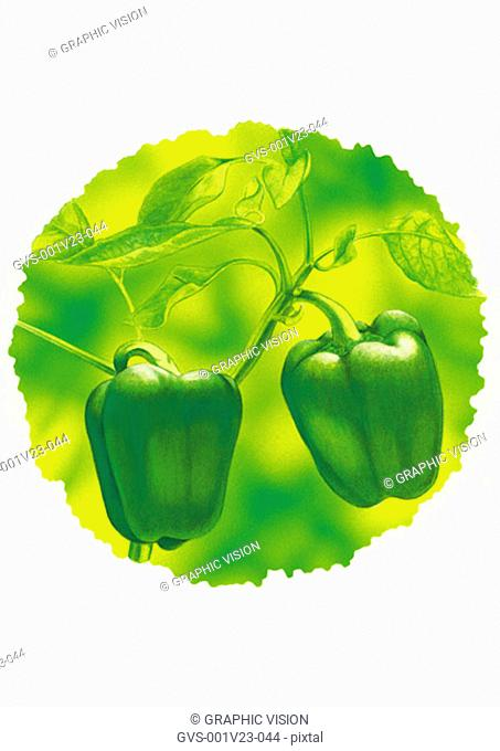 Illustration of Bell Peppers Growing