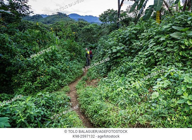 escursion entre bosque tropical, Los Cerritos, Lancetillo, La Parroquia, zona Reyna, Quiche, Guatemala, Central America