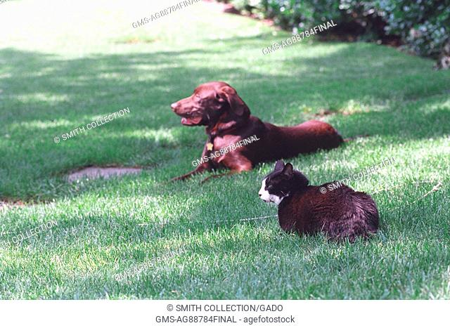 Socks the Cat and Buddy the Dog, First Family's pets, sitting on the South Lawn of the White House, June 6, 1998. Image courtesy National Archives