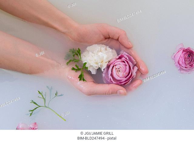 Hands of Caucasian woman cupping flowers in milk bath