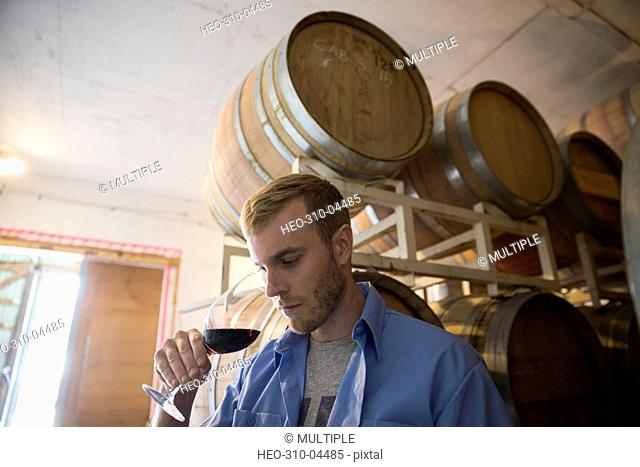 Male vintner smelling and checking red wine in winery barrel room