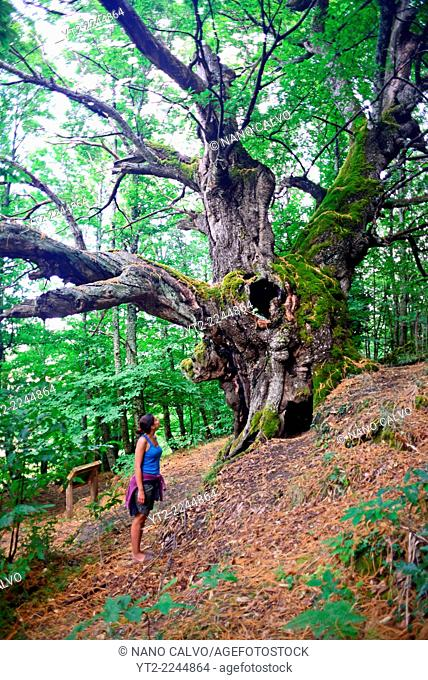 Young woman walking the Centenary Chestnuts Route in Casas del Castañar, Caceres, Spain