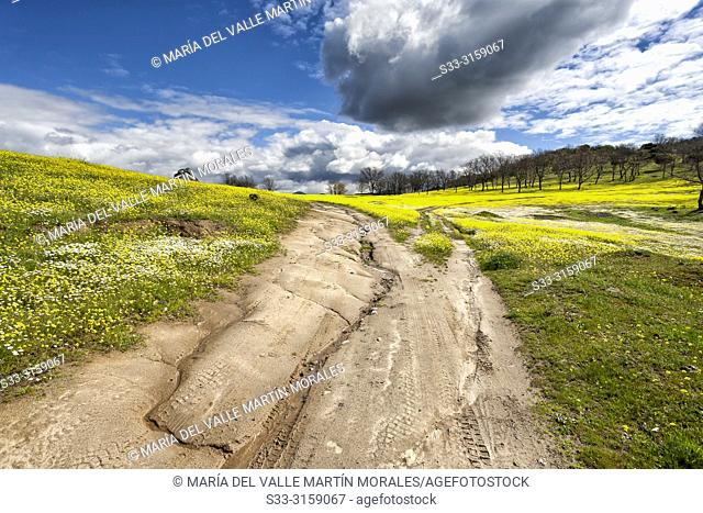 Clouds over a muddy road on a spring day in Higuera de las Dueñas. Avila. Spain