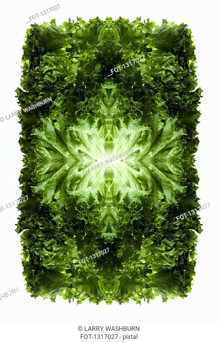 A digital composite of mirrored images of green leaf lettuce leaves