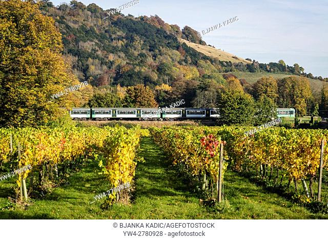 Southern Railway train passing by Denbies vineyard, Dorking, Surrey, England, UK