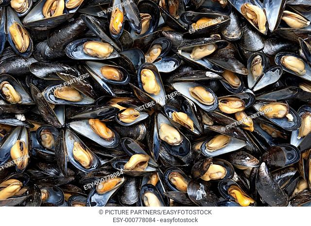 Cooked mussels full frame