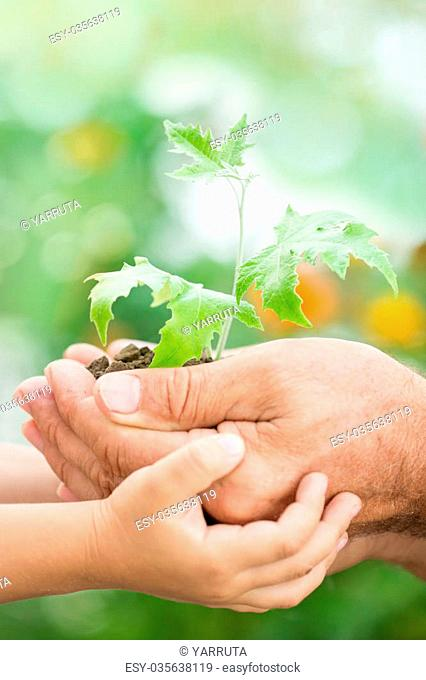 Old man and baby holding young maple tree against spring green background. Ecology concept