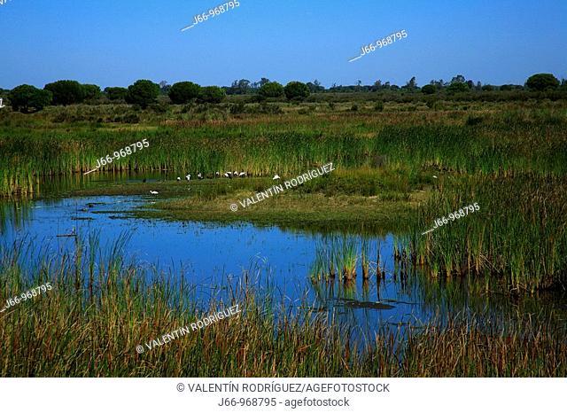 Laguna del Acebuche