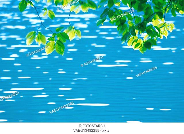 Several Green Leaves Over a Lake in Motion, Front View