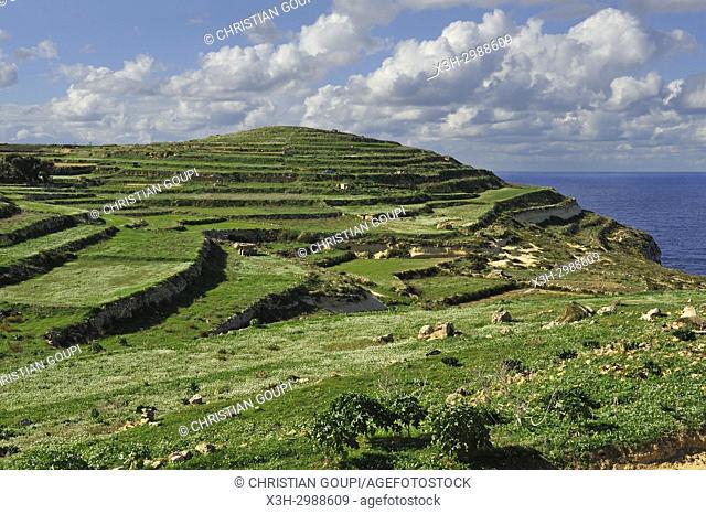terraced fields by the sea near Gharb, Gozo Island, Malta, Mediterranean Sea, Southern Europe