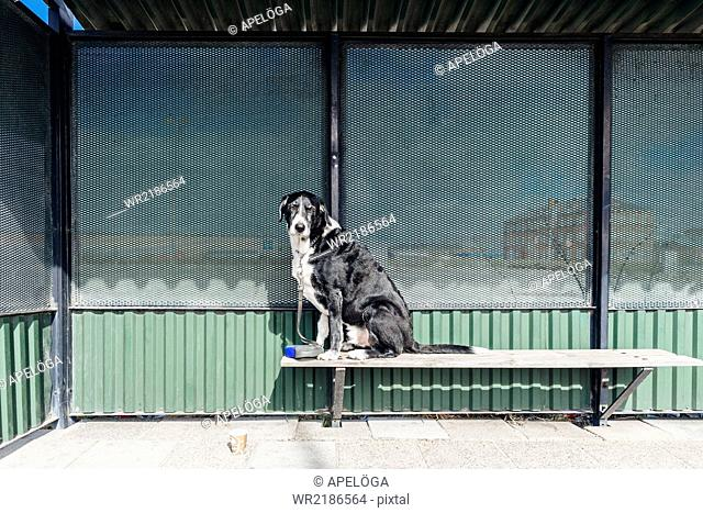 Portrait of mixed-breed dog sitting on bench outdoors