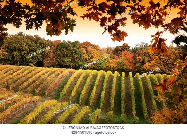 Domaine de Joy vineyards, Armagnac, Panjas, Midi-Pyrenees, France