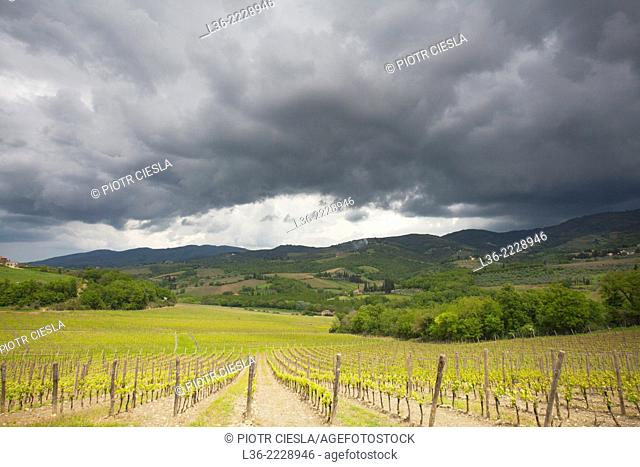 Italy, Chianti region, spring in the wineyards
