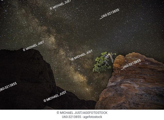"""The Milky Way appears behind the """"""""Bonsai Tree"""""""" at Zion National Park, Utah"""