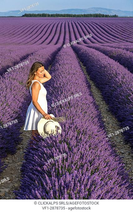 Woman with hat in a lavender field. Plateau de Valensole, Alpes-de-Haute-Provence, Provence-Alpes-Côte d'Azur, France, Europe