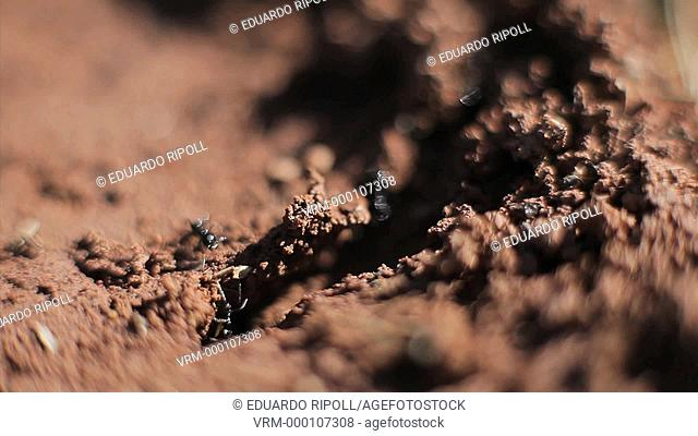 closeup of ants walking in the nature