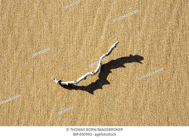 Branch of wood in hard light on the beach with distinctive shadow, shadow play, patterns in the sand, beach, Atlantic