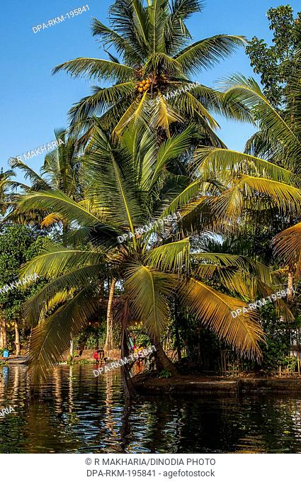 Backwaters river, alleppey, kerala, india, asia