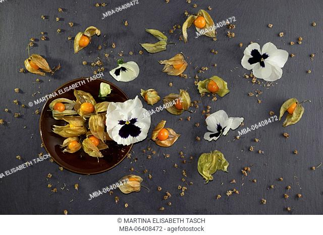 Physalis with white pansies