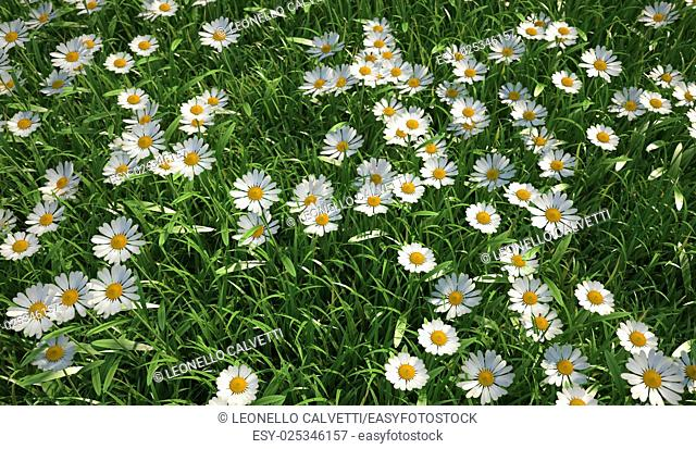 Close up bird eye view of a grass meadow, plenty of daisy flowers, viewed from above