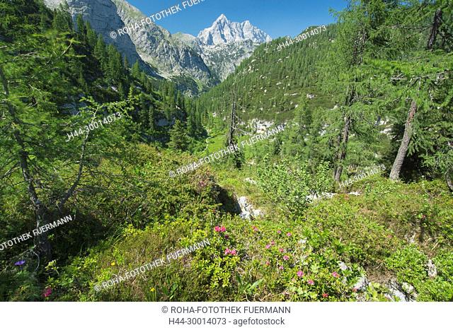 Weg zum Funtensee im Steinernen Meer mit dem Watzmann im Hintergrund mit der Südspitze