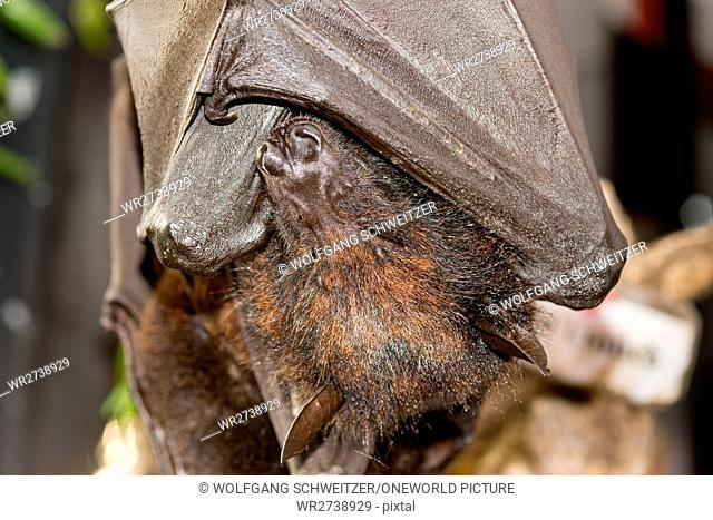 Indonesia, Bali, Kabudaten Badung, bat at Batu Bolong beach