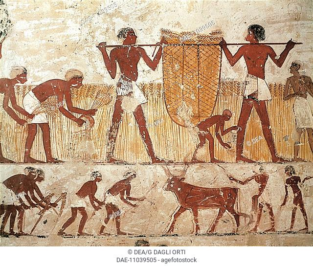 Egypt - Ancient Thebes (UNESCO World Heritage List, 1979). Shaykh 'Abd al-Qurnah (Abd el-Qurna). Mural paintings. Detail of agricultural works