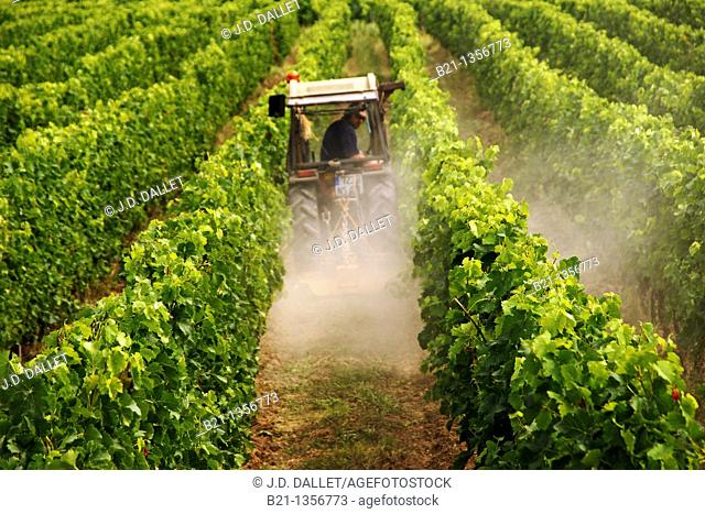 France, Aquitaine, Gironde, Medoc, plowing in a wine grapes field, at the Margaux area, in the Bordeaux wines district