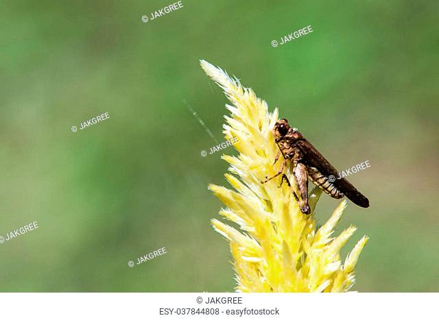 Grasshopper on the plant