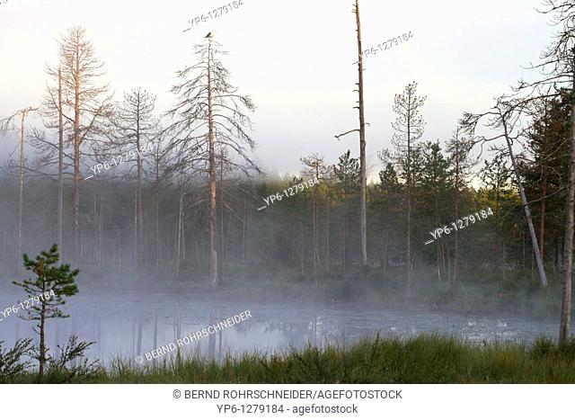 landscape with lake and fog at dawn, Finland