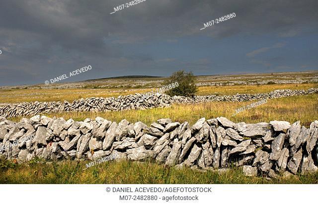 Burren stone wall, The Burren, County Clare, Ireland, Europe