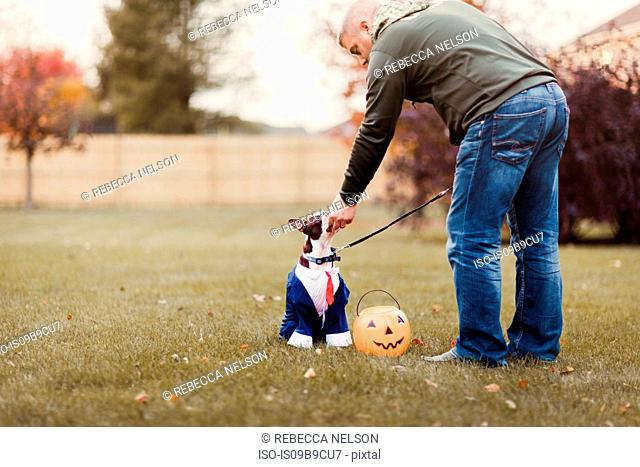 Man in park petting his boston terrier wearing business attire for halloween
