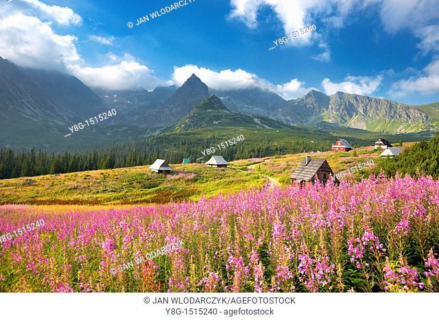 Gasienicowa Valley, Tatra National Park, Poland, Europe