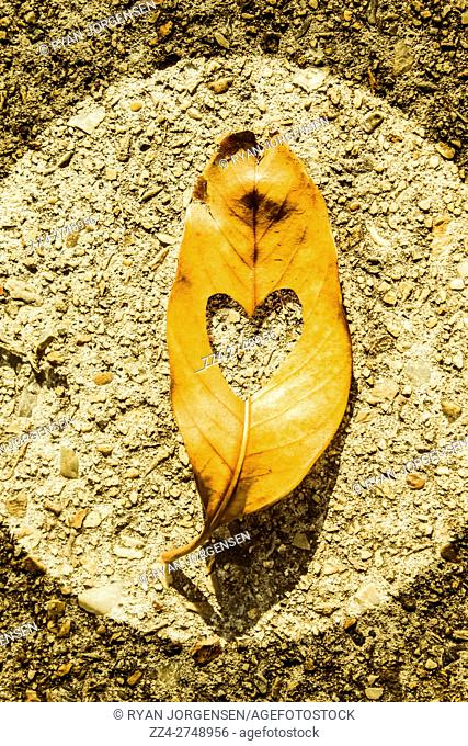 Fallen leaf framed on a cement circle with heart shape cutout. In autumns romance
