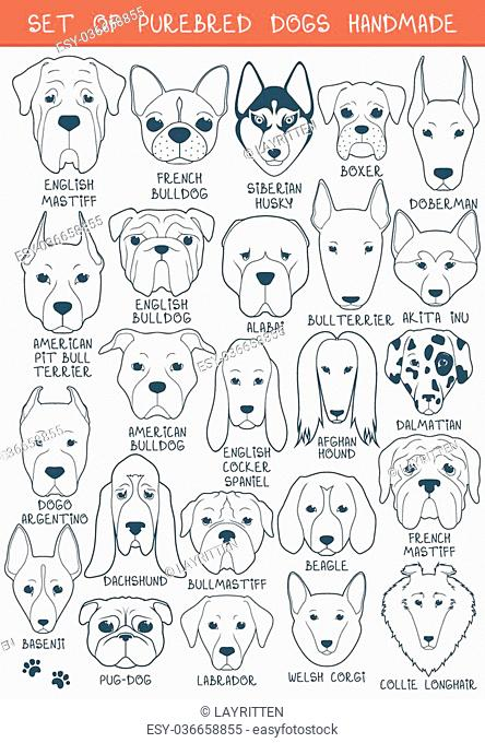 Set of 24 dogs of different breeds handmade. Head of dog. Icons with dogs. A sketch of animals. Doodle Dog. Set of isolated dogs for design
