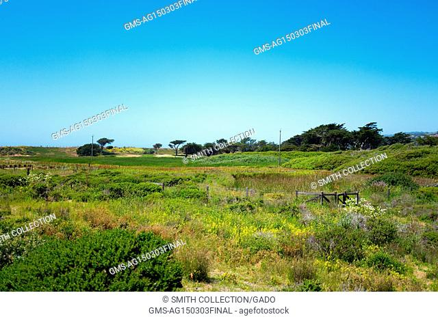 Wetlands and wildflowers at Mori Point, part of the Golden Gate National Recreation area, in Pacifica, California, June 20, 2017